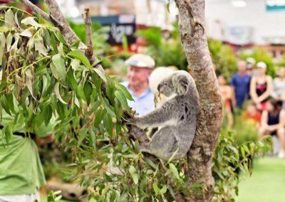 Mobile Zoo Koala 2
