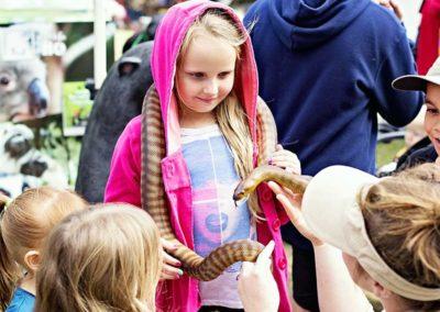 snakes-fixed2