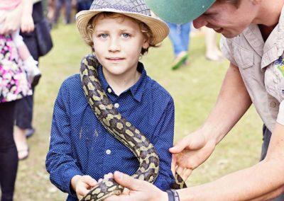 snakes-fixed4