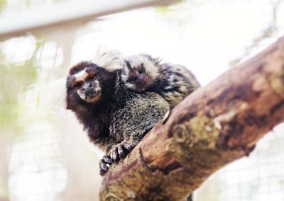 sth-american-monkey2