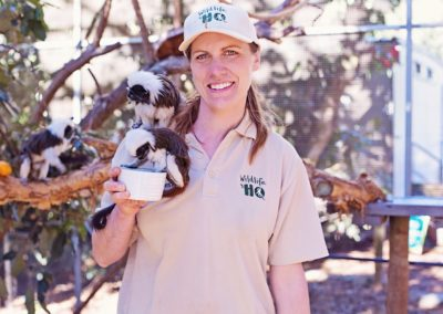 Cotton Top Tamarin Encounter