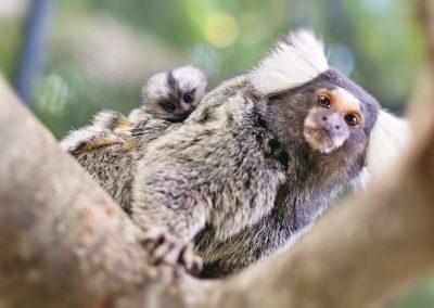 sth-american-monkey1